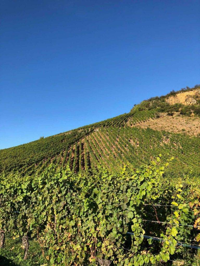 alsace-vineyards