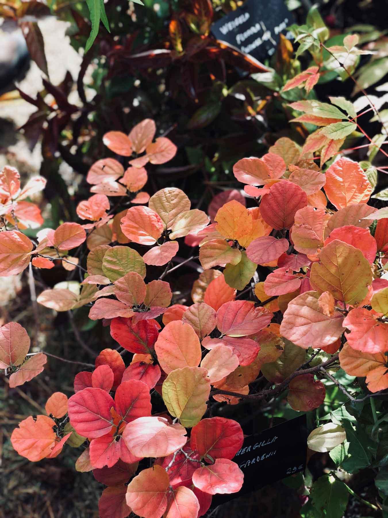 fall-plant