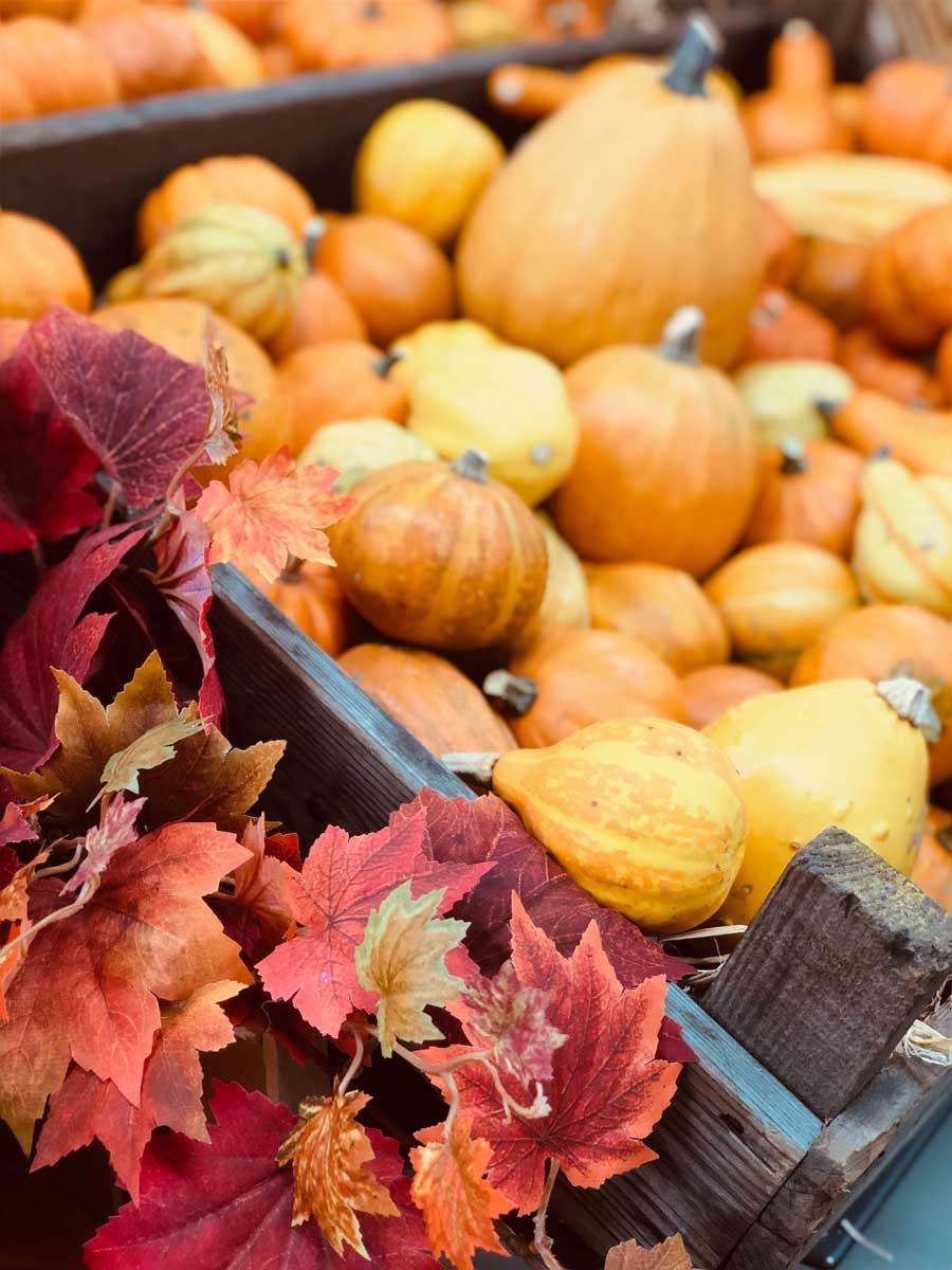 pumpkin-shop